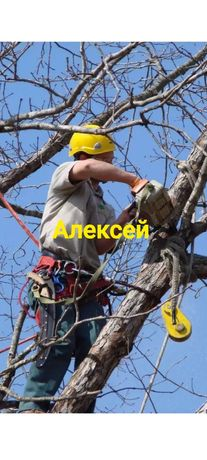 Пилим деревья Альпинист  Автовышка