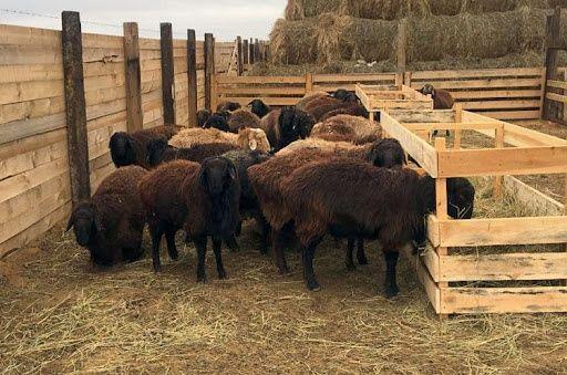 КРС коровы бычки бараны