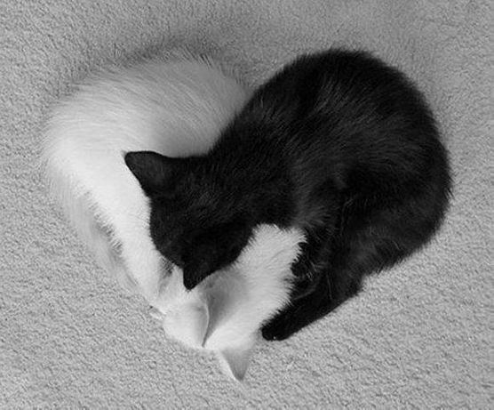 Очень очаровательные котятки