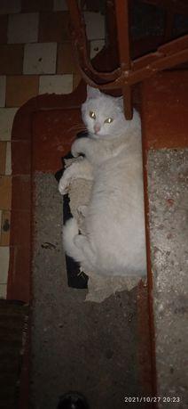 Хорошенький молодой котик ищет хозяина