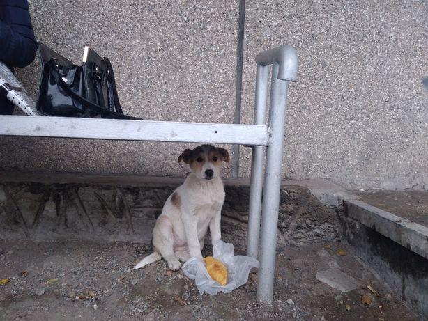 На остановке маленький щенок