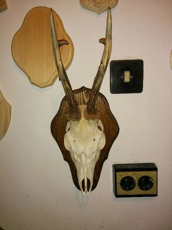Поставки за ловни трофей