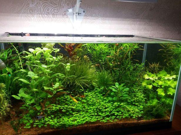 Кронштейн для ламп или прожекторов для освещения аквариума