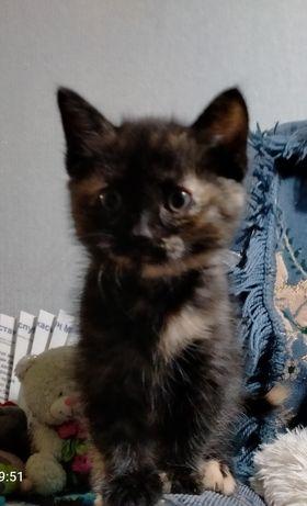 Кошечки-крошечки ищут новый дом