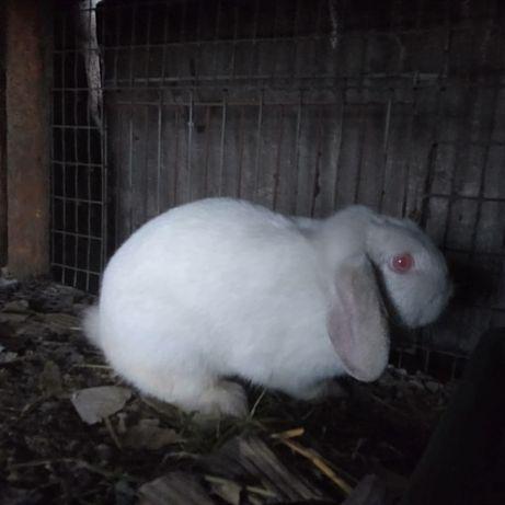 Отдам в хорошие добрые руки декоративного кролика девочка