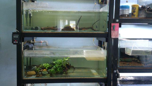 аквариумы 135 литров