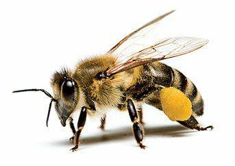 Roi de albine cu matci 2021 carpatine