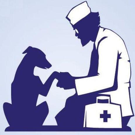 Ветеринариялық қызмет үйге шақыру / Ветеринарный услуги на дом