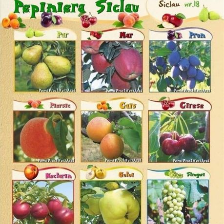 Pomi Fructiferi altoiti Pepiniera Siclau