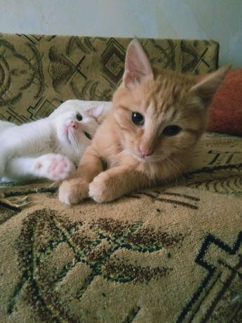 Котята ищут любящую семью