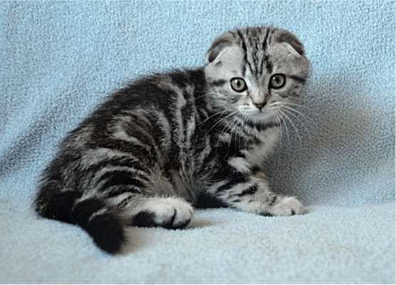 Не котёнок ,а просто клад!Придите и убедитесь!В одном экземпляре!