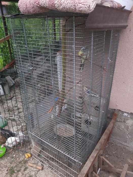 Vand voliera  papagali Berzunti - imagine 1