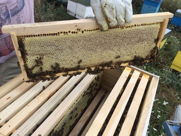 пчелен мед и пчелен прашец 2019г