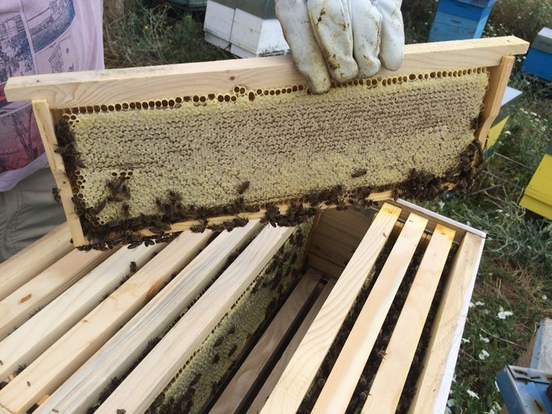 пчелен мед и пчелен прашец 2019г гр. Пловдив - image 1