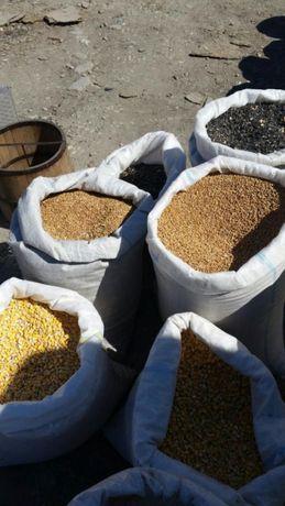cereale grau/ porumb/ floarea soarelui