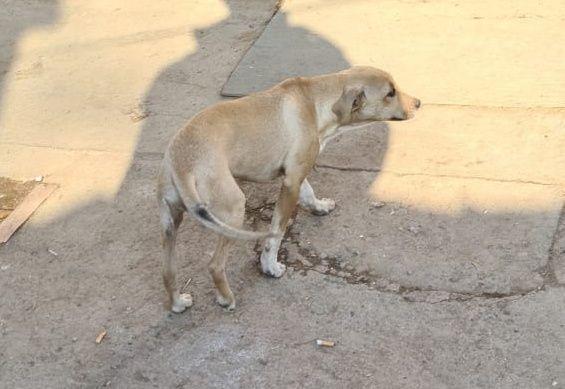 Продам щенка 5мес