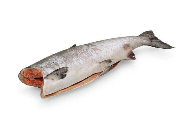 морская рыба  балык лосось чавыча