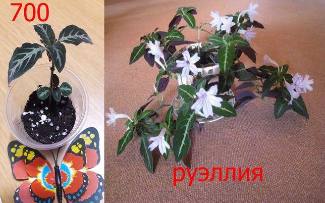 Комнатные   цветы  в  наличии