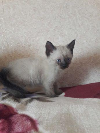 Котик.  2 месяца.