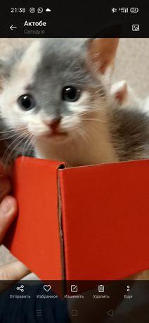 Отдам котёнка. Девочка. 1.5 месяца