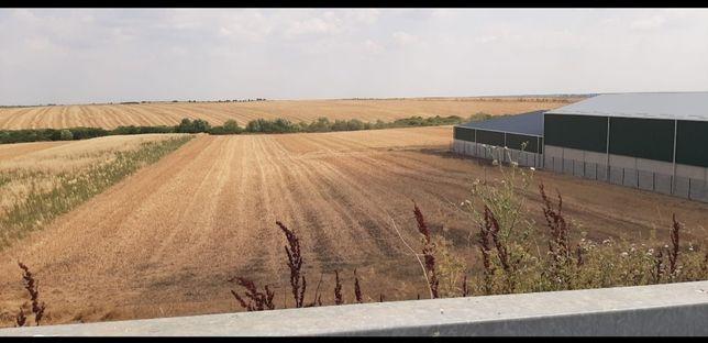 Vând teren extravilan în Giarmata