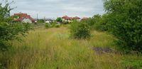 Cosire curatare defrisare tocare ambrozie iarba rugi arbusti