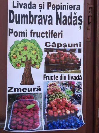 Pomi fructiferi altoiti, arbusti fructiferi