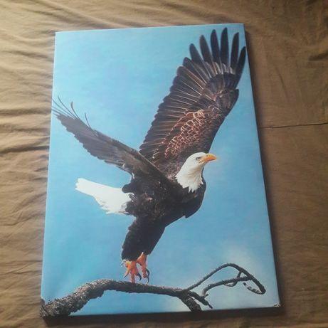 Tablou canvas vultur codalb pe rama de lemn 53x74 TRANSPORT GRATUIT