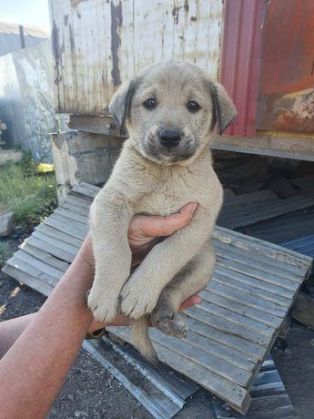 Красивые щенки в хорошие руки