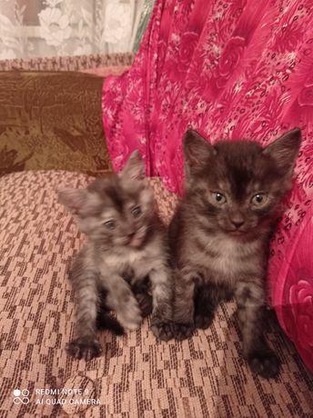 Котята хорошие в добрые руки