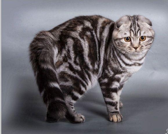 Опытный котик на вязку