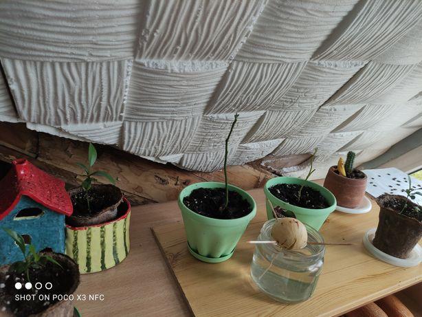 Распродажа растений