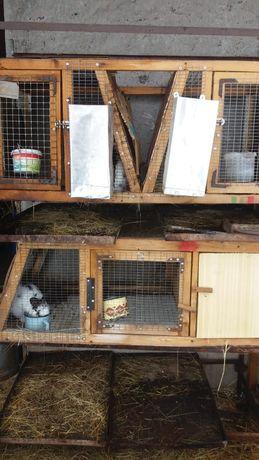 Клетка для кроликов самцов ,130см на 50см и на 170см