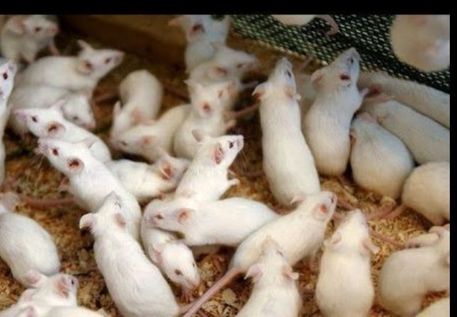 Лабораторные животные
