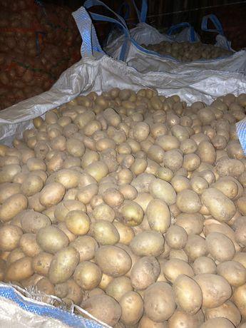 Cartofi Samanta Bela Roza si Carrera