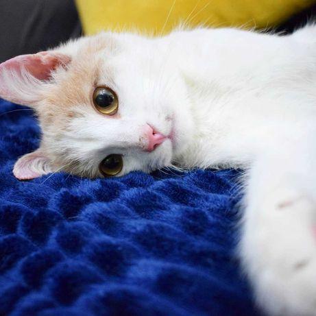 Трехлапый кот в ответственные руки