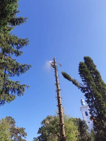 Alpinism utilitar. Taieri, doborari copaci uscati, periculosi !