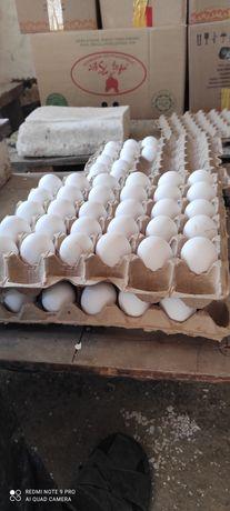 Яйца домашние фермерские