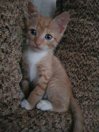 Отдам котёнка рыжее солнышко!
