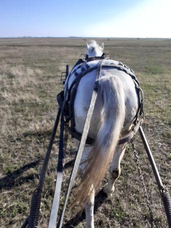 Vând iapă foarte buna de căruță