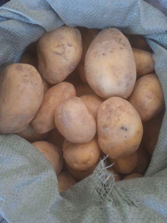Картошка местный оптом