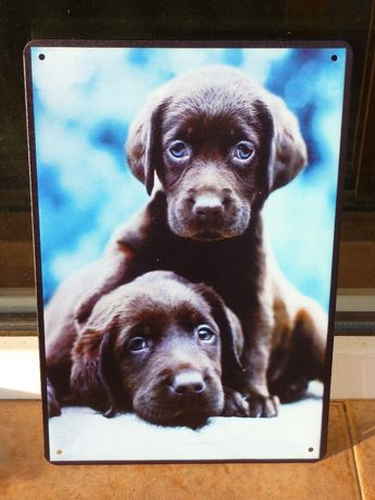 Две сладки кучета кученца табела готина рекламна котета