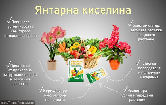 100% Янтарна Киселина на прах за цветя/козметика