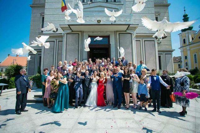 Inchiriez porumbei albi pentru nunti sau alte evenimente Targu Mures