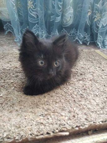 Отдам котят  черные приученые к  лотку