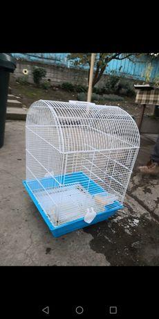 Colivie porumbel