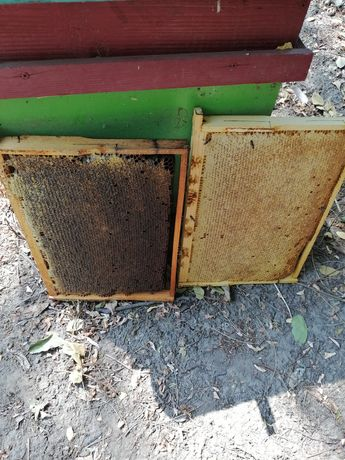 8--9tone miere poliflora în butoaie de 200 l