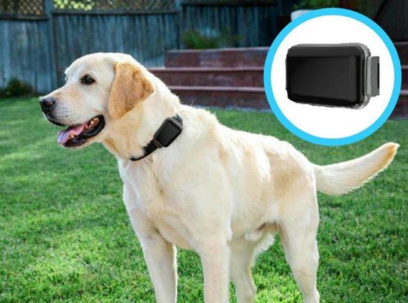 GPS за кучета - тракер / tracker с БЕЗПЛАТНО онлайн проследяване