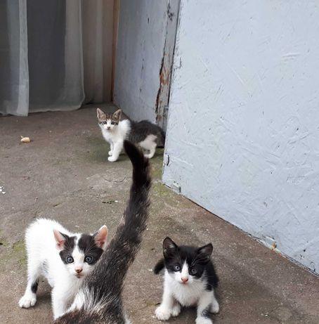 Dau spre adopţie 3 pisoiași drăgălași împreună cu mama lor.