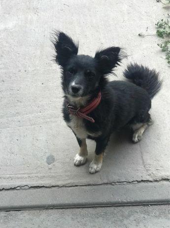 Пропала моя любимая собачка, пожалуйста помогите за вознаграждение